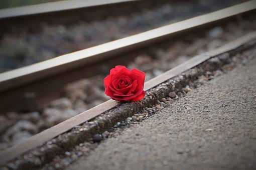 Stop Youth Suicide, Red Rose Near Rail