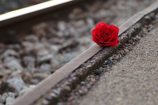 Red Rose Near Rail, Remembering All Victims