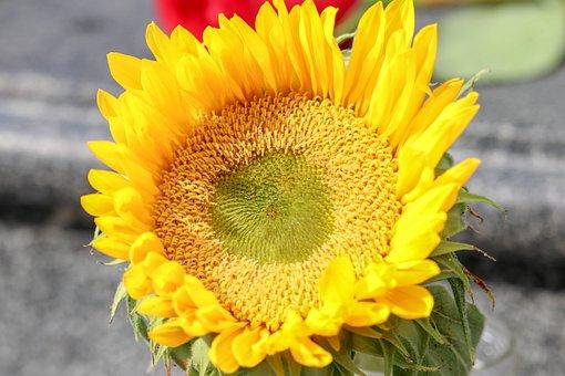 Sun, Flowers, Summer, Sunny, Plants