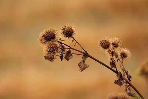 Thistle, Nature, Prickly, Close Up, Plant, Flora