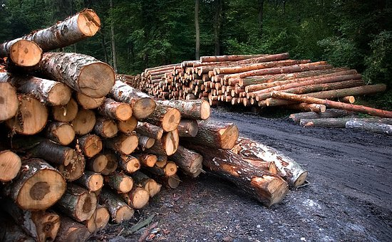 Wood, Cutting, Bale, Pine, Forest, Tree, Nature, Cut