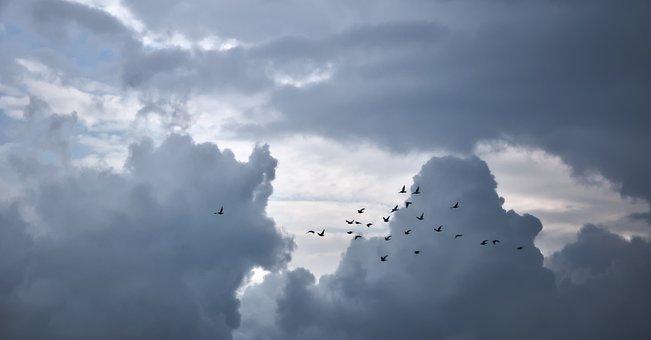Clouds, Birds, Pigeons, Sky, Bird, Flight, Way