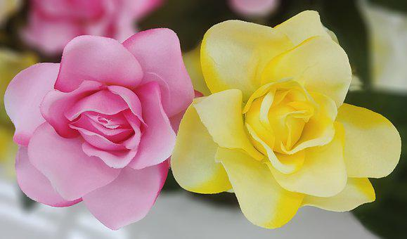 Rose, Harmony, Artificial Flower, Flowers, Pink, Yellow