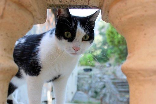 Cat, Black And White, Black, And White, Feline, Cute