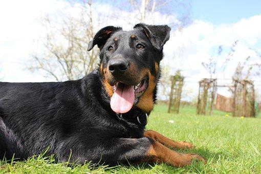 Dog, Grass, Mammals, Animal, Nature, Green, Race, Sky