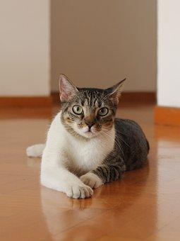 Cat, Pet, Animal, Portrait, Fur, Feline, Kitten, Head