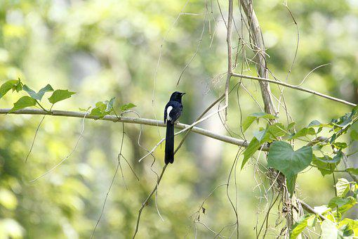Bangladesh, Nature, Bird