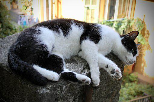 Cat, Black And White, Black, White, Lying, Animal, Pet