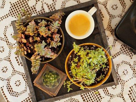 Coffee, Espresso, Succulents, Cactus, Background, Plant