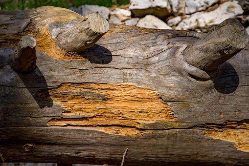 Wood, Cedar, Tree, Texture