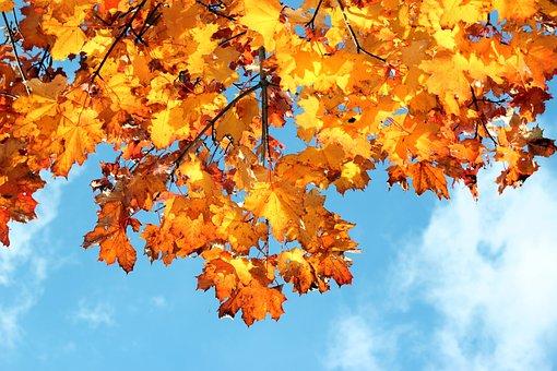 Autumn, Colors, Leaves, Foliage, Color, Colorful, Clear