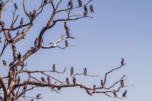 Cormorant, Tree, Water Bird Sanctuary, Nature, Bird
