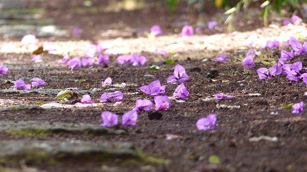 Flower, Mood, Flowers, Pink, Romantic, Nature, Purple