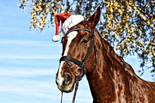 Horse, Santa Hat, Funny, Brown, Animal, Animal World