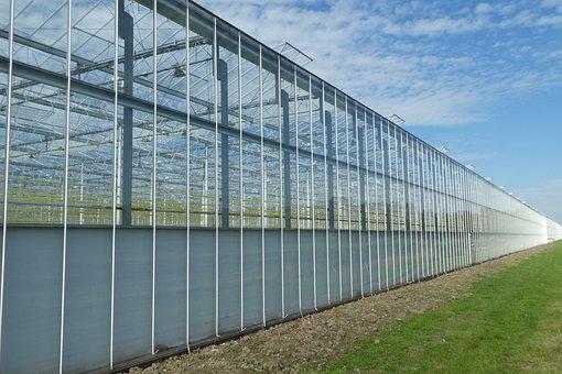 Cash, Horticulture, Garden, Environment, Agriculture