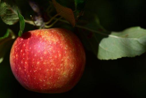 Apple, Alcmene, Greeting Card, Beautiful, Fruit