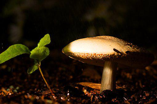 Mushroom, Ground, Nature, Forest, Fungus, Brown