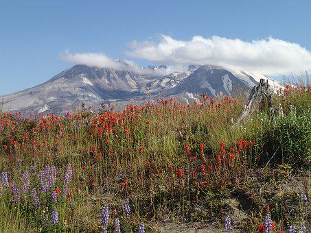 Mt, St, Helens Indian Paintbrush