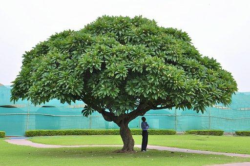India, Tree, Nature, Green, Exotic, Meditation, Man