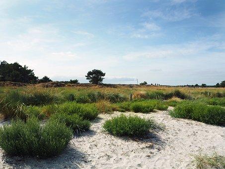 Dike, Nature, Landscape, Idyllic, Sand, Grasses, Mood