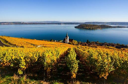 Lake, Fall, Vine, Landscape, Vines, Switzerland, Ligerz