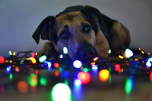 Christmas, Lights, Dog, A Hybrid, Portrait, Cute