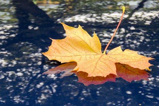 Maple, Leaf, Fall, Autumn, Nature, Car Hood, Shadow