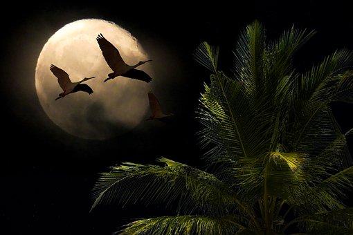 Landscape, Nature, Moon, Full Moon, Tree, Bird