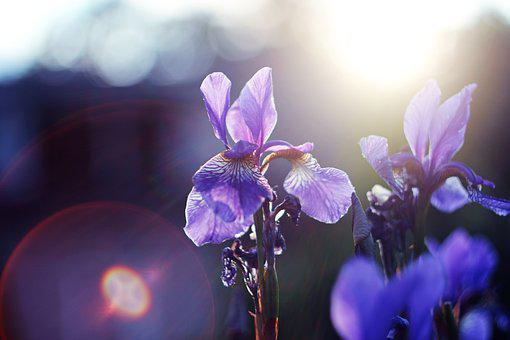 Flower, Backlight, Sun, Nature, Light, Trees, Morning