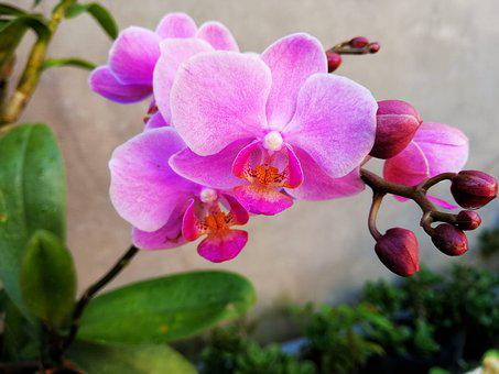 Orchids, Natural, Flaunted, Beautiful Flowers, Color