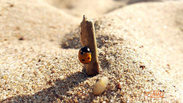God's Cow, Insect, Beach, Shell, Beetle, Nature, Red