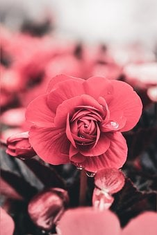 Flower, Water, Bloom, Nature, Blossom, Plant, Purple