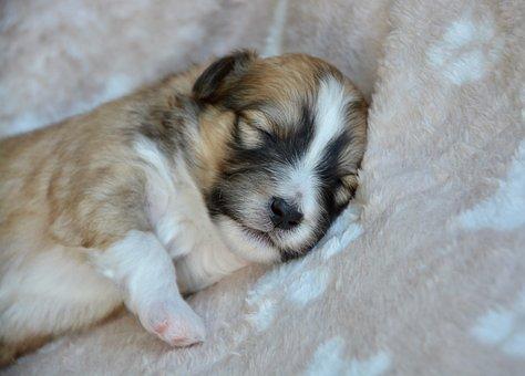 Puppy, Puppy Sleeping, Baby Dog, Puppy Ouba, Dog Ouba