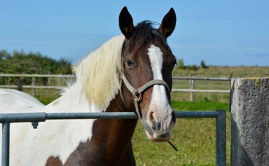 Horse, Riding Stable, Equine, Horseback Riding, Sport