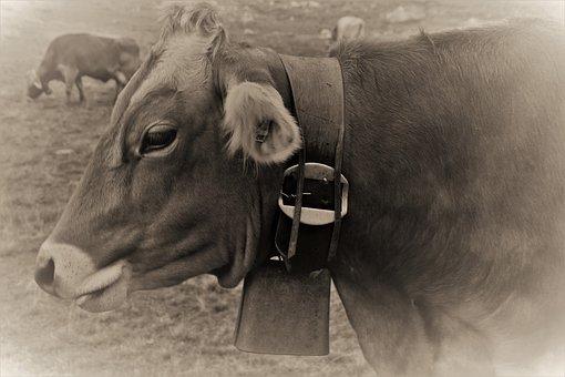 Ringtone, Cow, Alpine, Figure, Switzerland, Cattle
