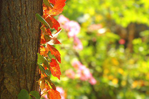 Leaves, Wood, Autumn, Deciduous, The Leaves, Nature