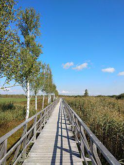 Tree, Blue Sky, Bridge, Cool, Good Weather