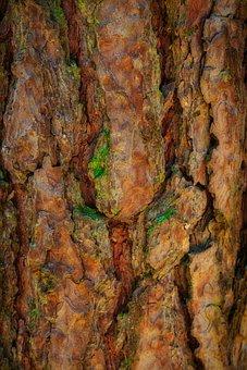 Tree Bark, Beautiful, Bark, Tree, Nature, Structure