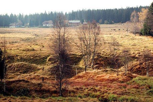 Landscape, šumava, Nature, Forest, Trees, Water