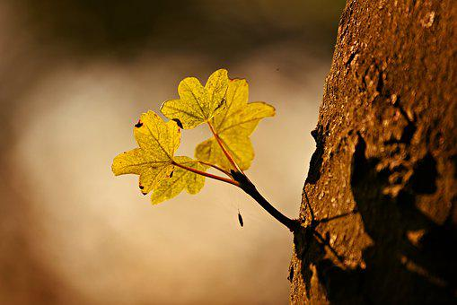 Leaf, Shoot, Growth, Tree, Trunk, Bark, Back Lighting