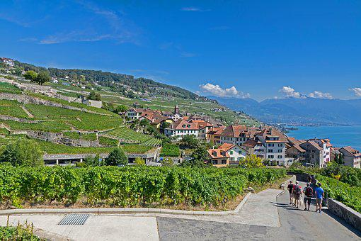 Vines, Vineyard, Wine, Wine Red, Grapevine, Lake Geneva