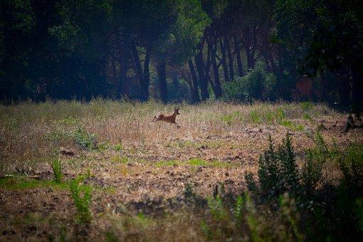 Campaign, Deer, Animal, Freedom, Jump, Fauna, Wild