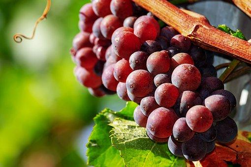 Grapes, Fruit, Red, Ripe, Sweet, Winegrowing, Wine