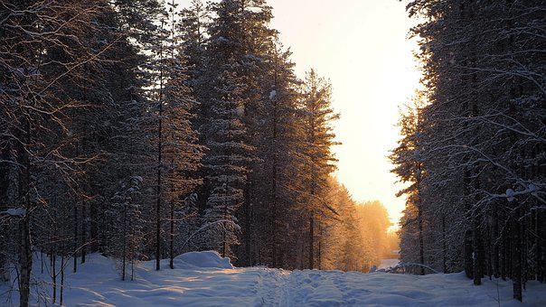 Winter, The Path, Forest, Wood, Snow, Snowy, Sunset