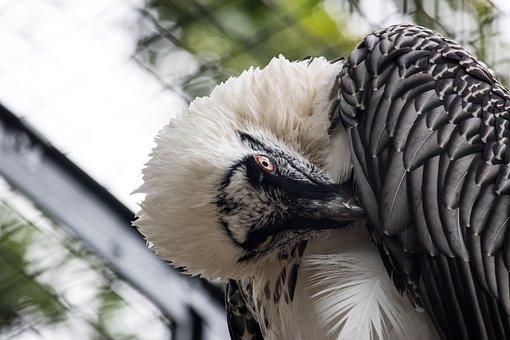 Bart Geiger, Raptor, Bird, Animal, Animal World
