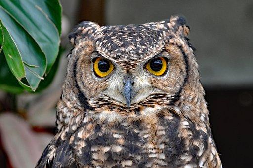 Owl, Bird, Animal, Birds Of Prey