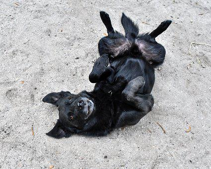 Dog, Play, Animal, Black, Funny, Fun