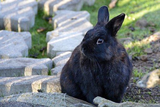 Rabbit, Hare, Animal, Cute, Easter, Nature, Pet