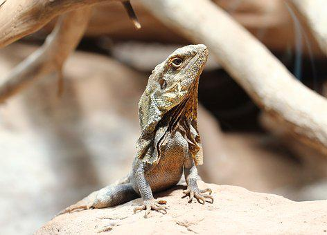 Chameleon, Reptile, Animal World, Insect Eater, Scale