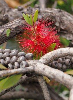 Big Flower, Japanese Garden, Botany, Nature